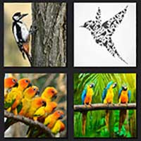 4 pics 1 movie answer cheat The Birds