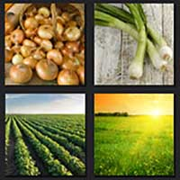 4 pics 1 movie answer cheat The Onion Field