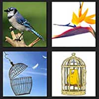 4 pics 1 movie answer cheat The Birdcage