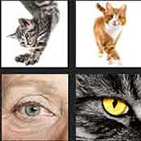 4 pics 1 movie answer cheat Cat's Eye