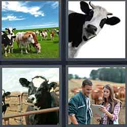 4 pics 1 word answers 6 letters pt 32 4 pics 1 word answers and cheats level cattle expocarfo Images