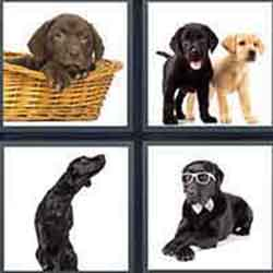 4 pics 1 word answers 8 letters pt 27 4 pics 1 word answers and cheats level labrador expocarfo Choice Image